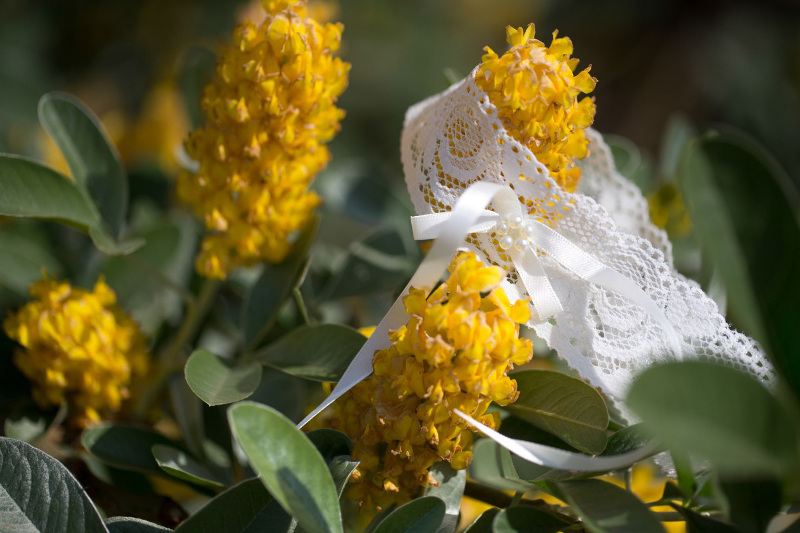 garter-on-some-yellow-flowers-3982