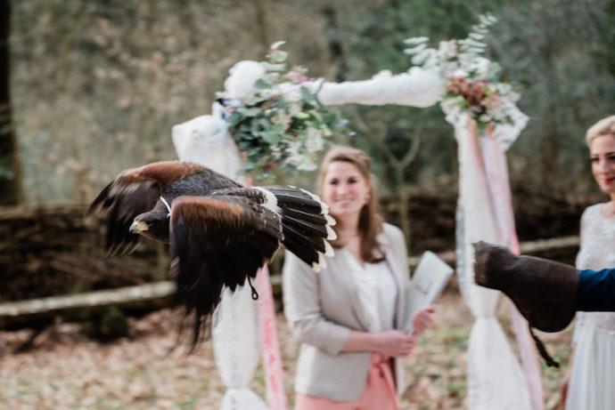 Greifvogel in Bewegung | bildsprache Sina Frantzen