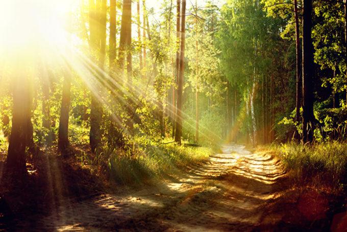 Natur | © panthermedia.net /Subbotina